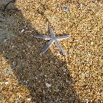 Starfish and sand