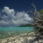 One of the islands in Muri Lagoon