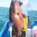 Liz's Fish