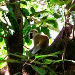 very nice monkeys seen occasionally