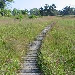 Path through the dunes area