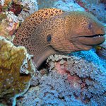Friendly Moray Eel Pose