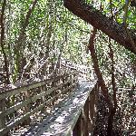 West Lake trail through mangroves