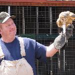 Barn Owl, Templeton