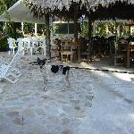 Hotel doggie by the dining area