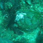 Marine life at Bida Nok - Sea turtle