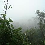 View over the cloud forest