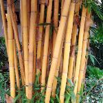 bamboo trees at Eurasia Chiang Mai hotel