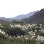 Scenic view within the estancia