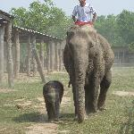 Visit of the elephant breeding station