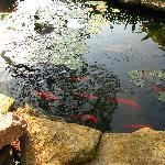 coy pond in the garden! how relaxing!