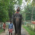 Elephant Safari at Kodanad near Ponmala Homes