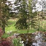 pond and vineyards at Lobenhuas