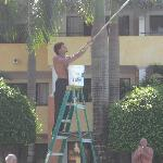 cheeky monkey painting the sky by the pool
