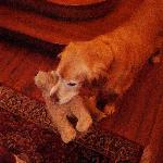 Cody and his toy