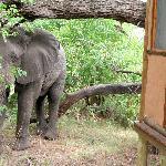 Elephant outside our room