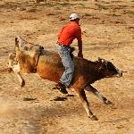Local rodeo held weeknights