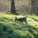 Deer in hotel gardens