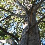 Day 3 - Pemberton Gloucestor Tree - 2