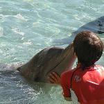 nel delfinario