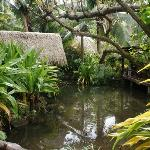 loved the tropical garden layout