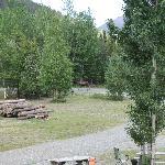 moose on property