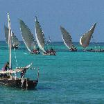 Dhow Fishing Fleet