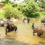 Thai Elephant Home
