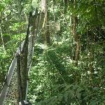 The canopy walk - not for the fainthearted!