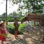 Feeding the animals in the Botanical garden