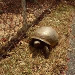 Even a tortoise roaming around the property!