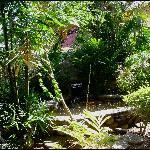Enchanted Waters Tobago Foto