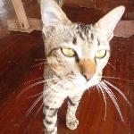 Basil the cat