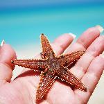 sea star from acuazul beach