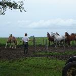 Horses and vaqueros