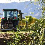 working the vineyard across the stream