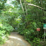 Kinsakubaru Forest