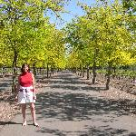 Sterling Vinyards in Napa