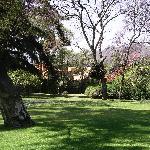 Doris Olmedo's garden