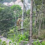 The monkey on the wires