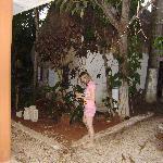 Garden with mango trees