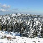 Spectacular winter in Troodos