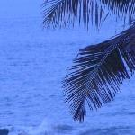 Swaying Palms and Crashing Surf - view from the outdoor restaurant