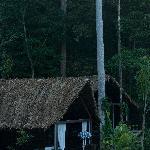Oxygen Cabin Jungle