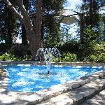 Fountain surrounded by stately trees