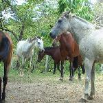 6 horses on the property