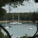 View of the harbour from the woods