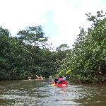 Wailua kayak and rainforest trip