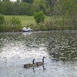 Cranberry Pond