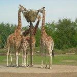 safari by car